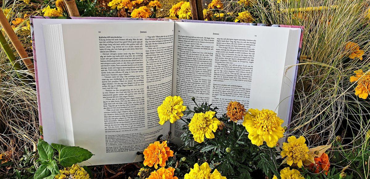 Kreativ bibel rosa via bibelbutiken.se
